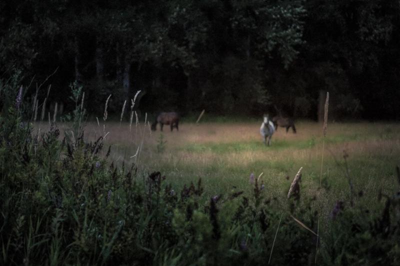 horsesstacked-Edit