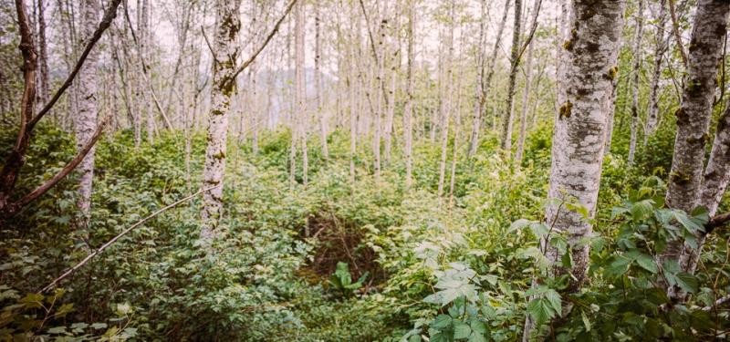 satforest